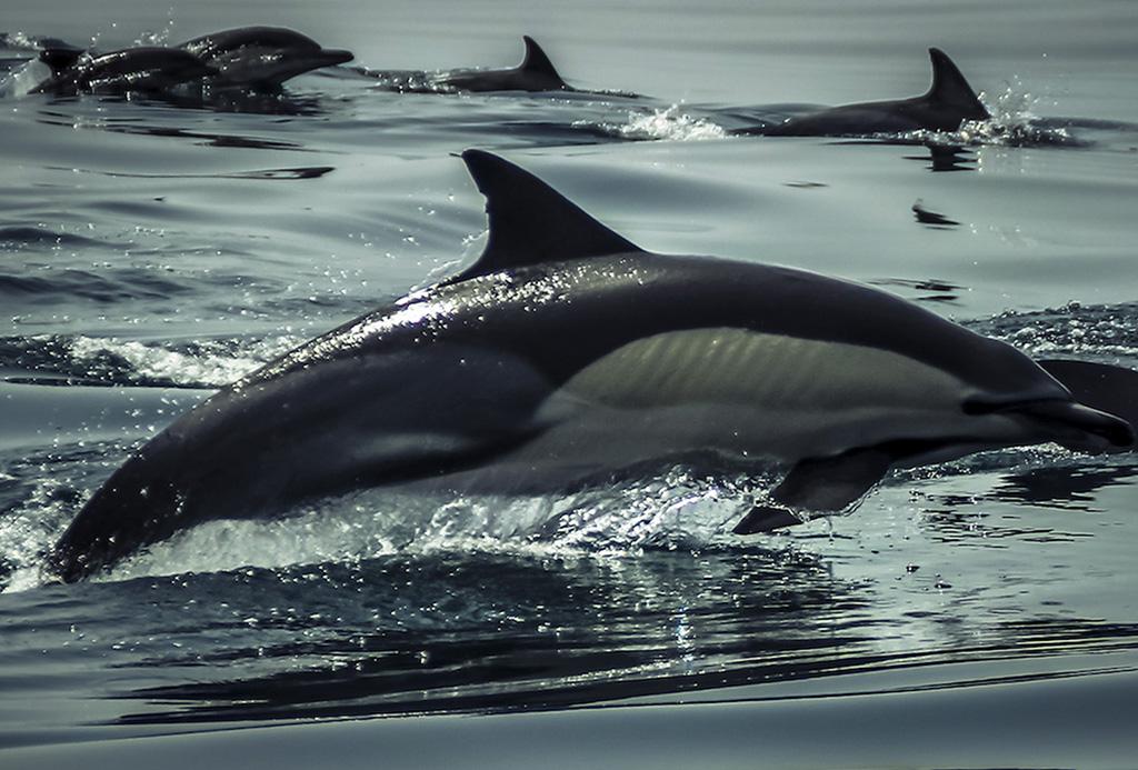 01Experiencia golfinhos2